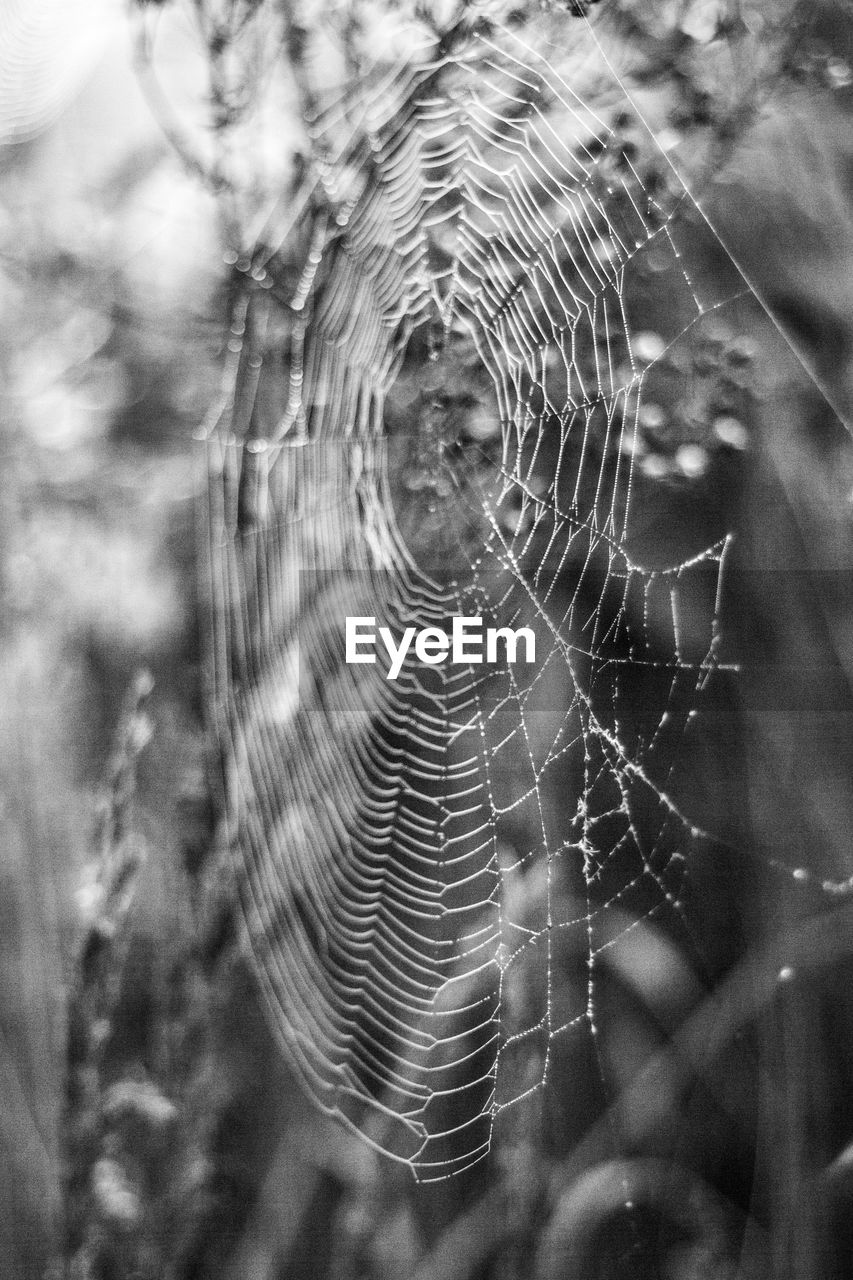 spider web, focus on foreground, web, nature, spider, close-up, day, no people, outdoors, trapped, fragility, survival, beauty in nature, freshness