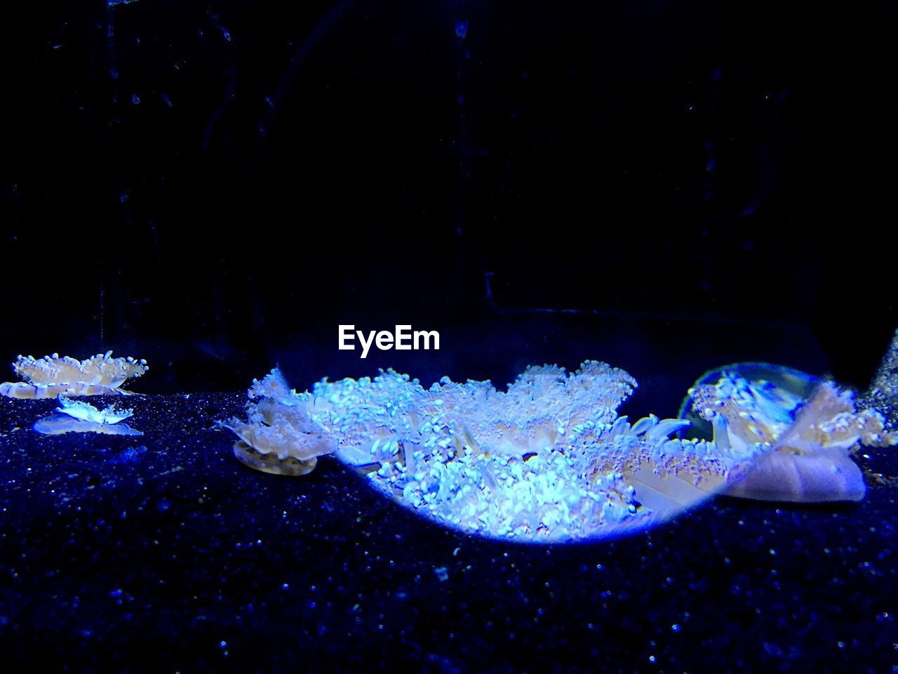 underwater, sea life, water, swimming, animal themes, undersea, animals in the wild, one animal, no people, aquarium, close-up, sea, tentacle, animal wildlife, jellyfish, nature, indoors, day