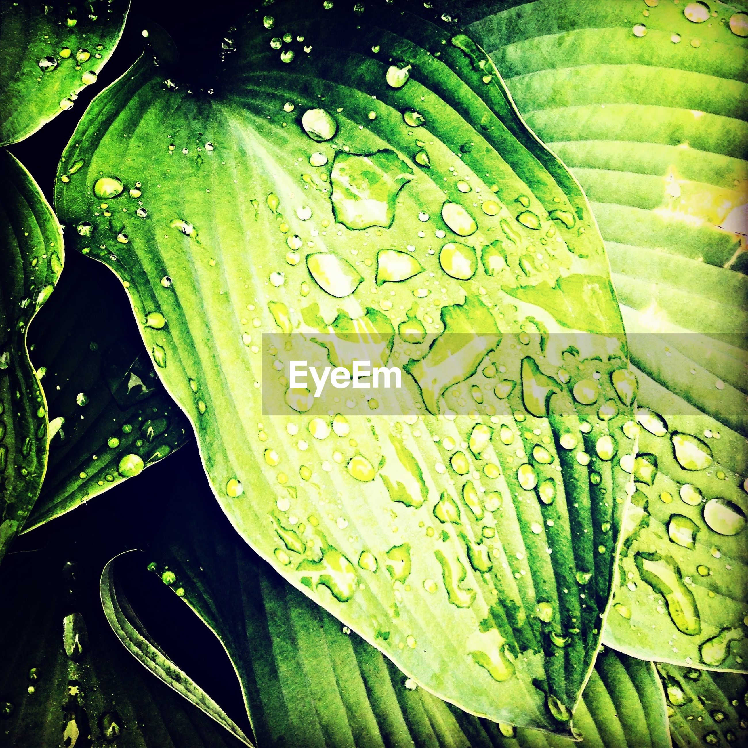 leaf, drop, water, wet, green color, freshness, growth, leaf vein, close-up, plant, dew, nature, full frame, backgrounds, beauty in nature, raindrop, leaves, natural pattern, fragility, rain