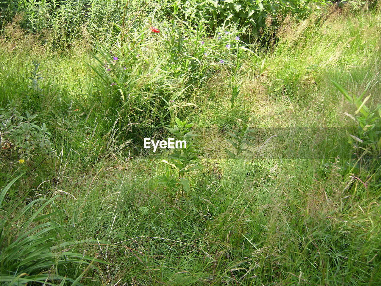 grass, growth, field, nature, green color, plant, outdoors, no people, day, beauty in nature