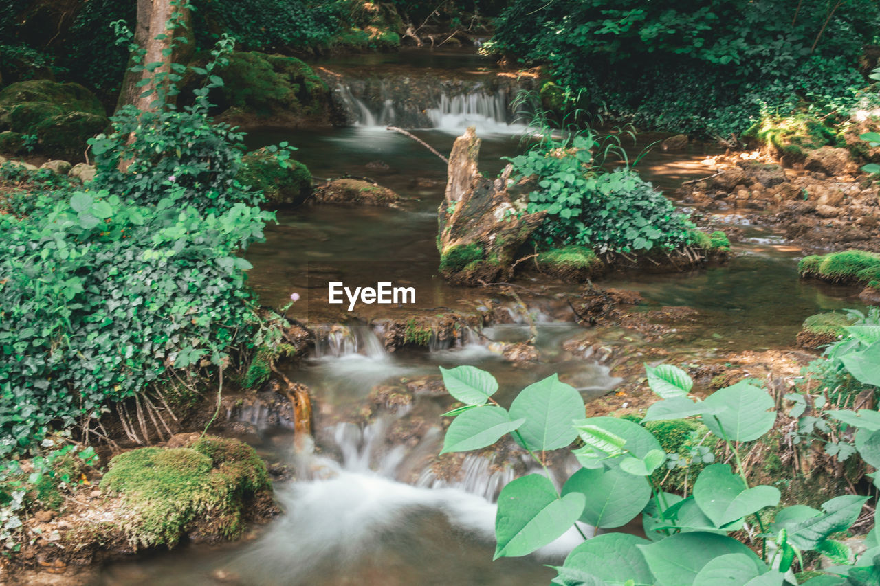 water, plant, nature, tree, beauty in nature, plant part, forest, growth, leaf, motion, scenics - nature, no people, waterfall, flowing water, long exposure, day, tranquility, blurred motion, green color, outdoors, flowing