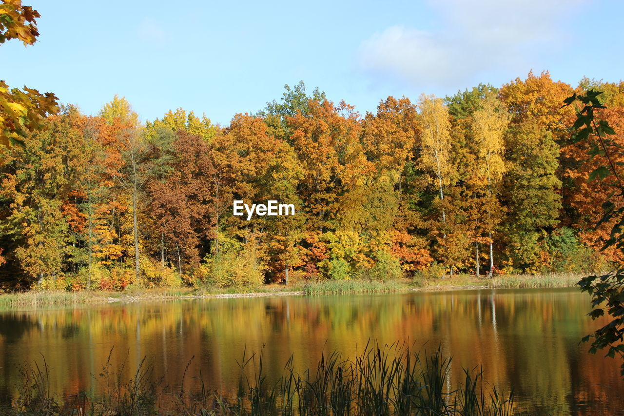 tree, autumn, change, nature, lake, beauty in nature, reflection, scenics, tranquil scene, water, tranquility, leaf, outdoors, sky, day, no people, growth, cloud - sky