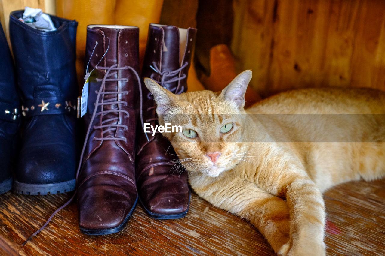 CLOSE-UP PORTRAIT OF CAT ON SHELF