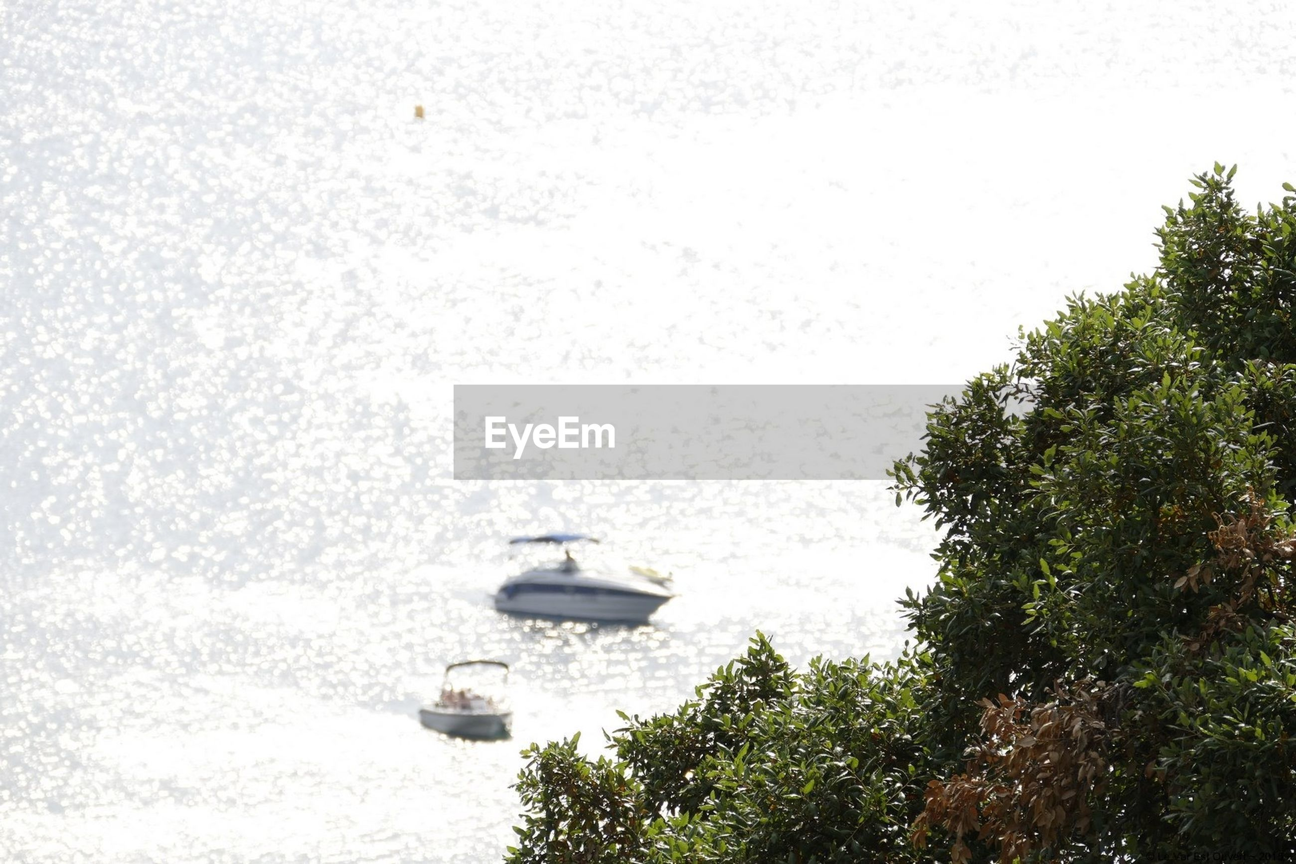 High angle view of boats on sea with trees in foreground