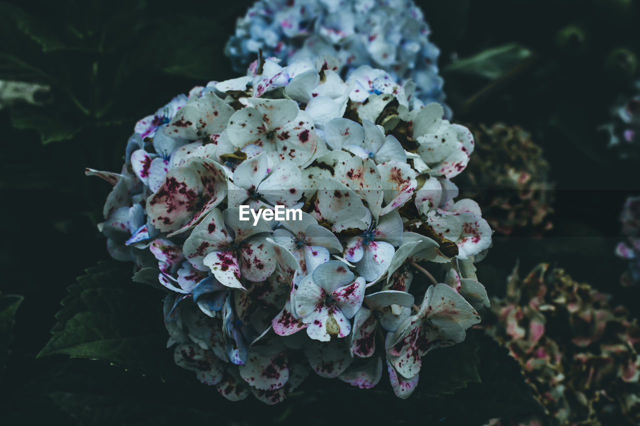 flower, nature, fragility, beauty in nature, growth, petal, no people, day, outdoors, close-up, plant, freshness, flower head