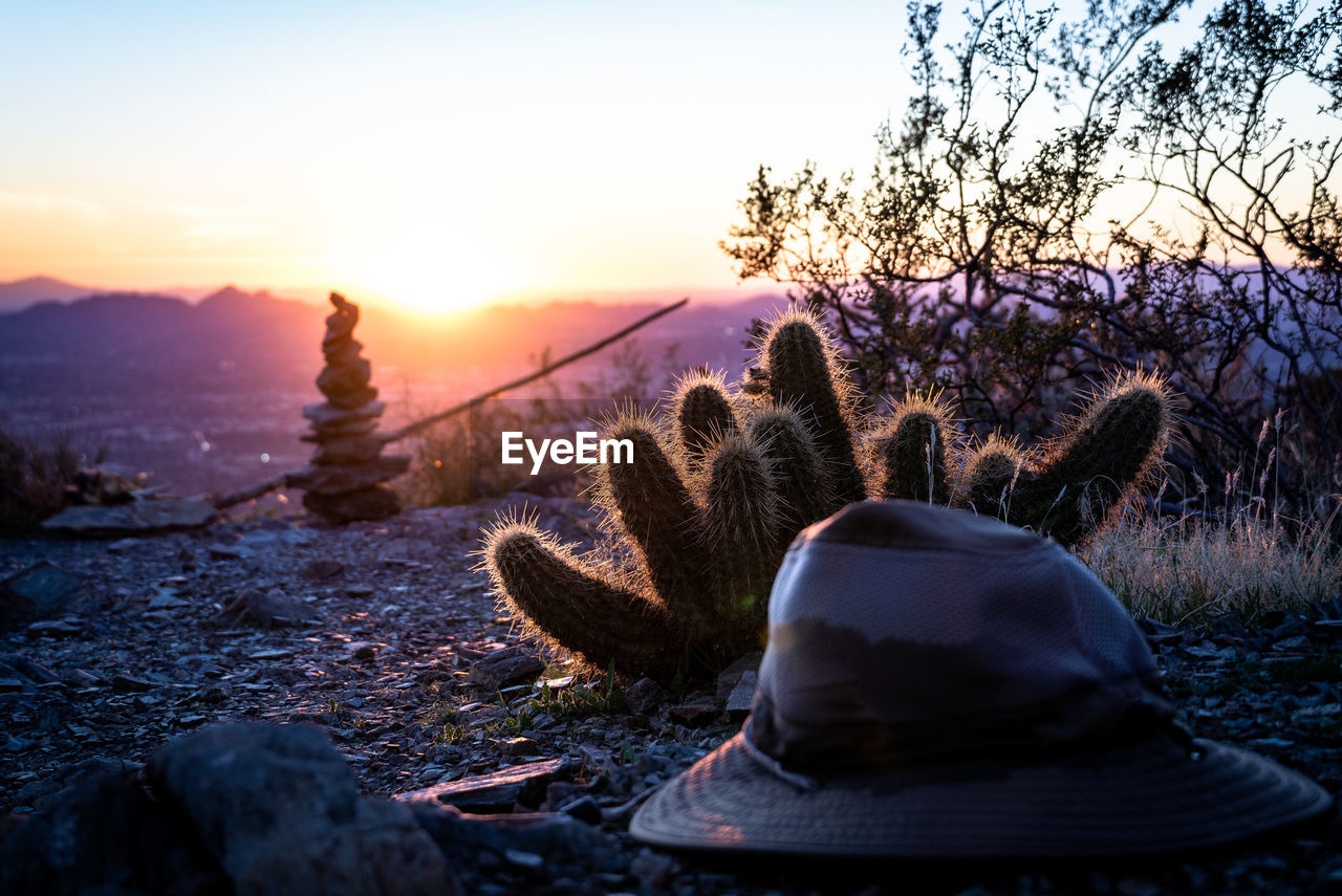 Cactus growing on field with hat against sky during sunset
