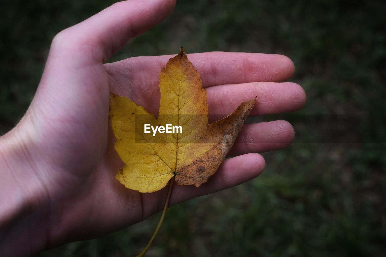 human hand, hand, human body part, autumn, holding, leaf, plant part, yellow, one person, real people, change, close-up, lifestyles, day, personal perspective, nature, dry, body part, unrecognizable person, focus on foreground, finger, outdoors, maple leaf, leaves, human limb, autumn collection