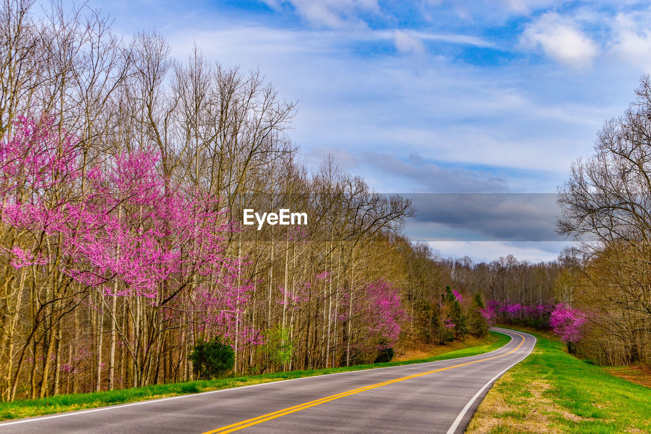 plant, road, tree, sky, beauty in nature, transportation, the way forward, direction, cloud - sky, nature, flower, pink color, tranquility, no people, growth, scenics - nature, tranquil scene, flowering plant, empty road, diminishing perspective, outdoors, springtime, purple, dividing line