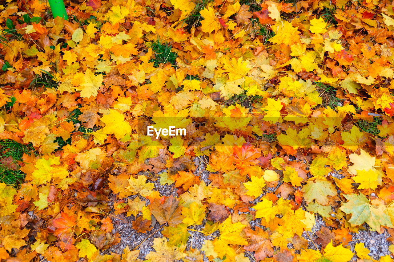 yellow, backgrounds, full frame, plant part, autumn, leaf, flower, no people, beauty in nature, abundance, nature, vulnerability, fragility, high angle view, change, day, flowering plant, plant, orange color, close-up, leaves, outdoors, maple leaf, natural condition, autumn collection