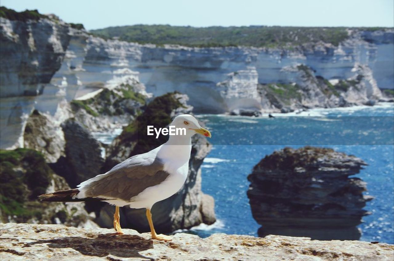 rock - object, animal themes, water, animals in the wild, bird, one animal, day, sea, nature, rock formation, animal wildlife, no people, perching, seagull, focus on foreground, sunlight, beauty in nature, beach, outdoors, retaining wall, close-up