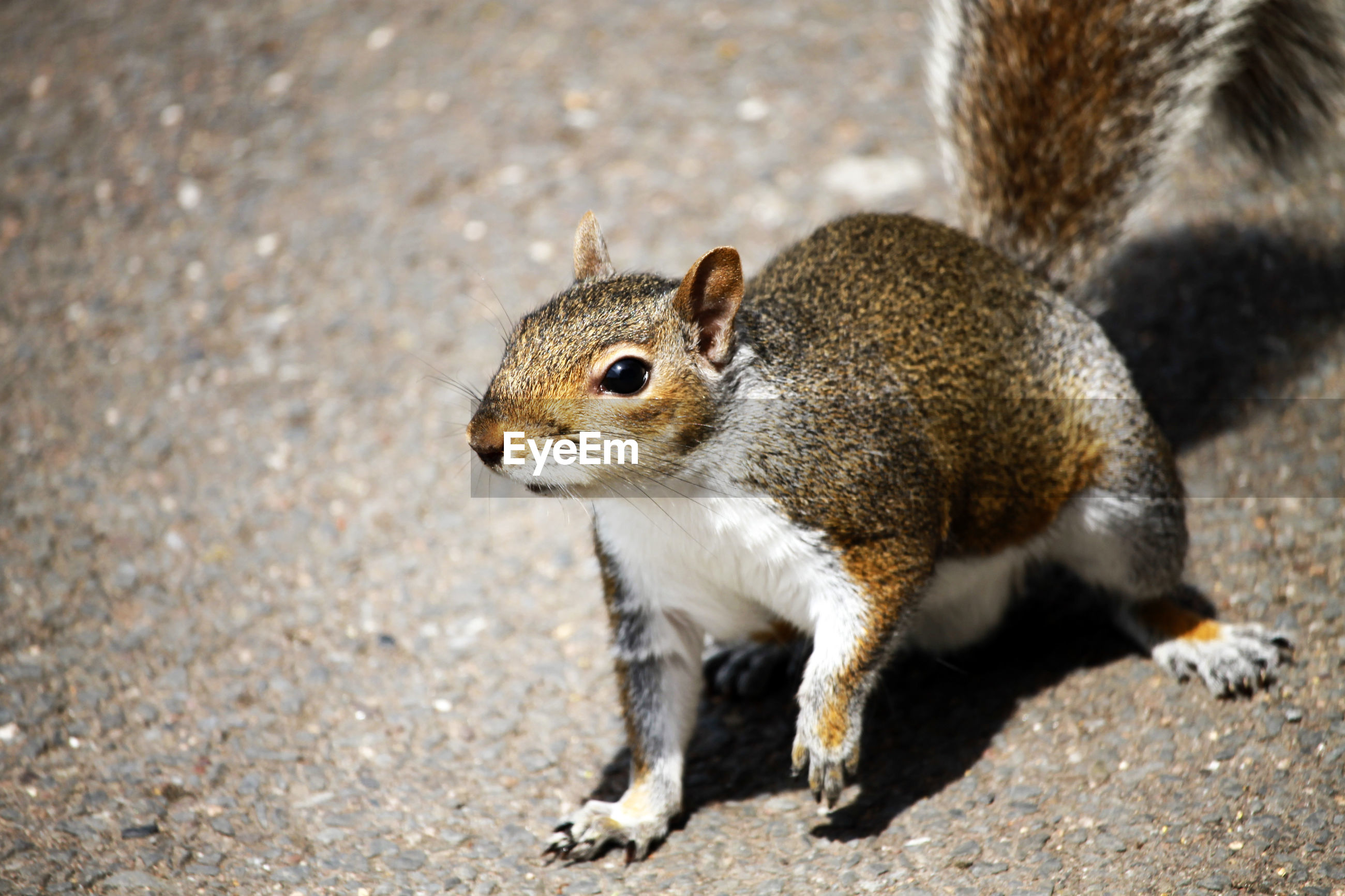 HIGH ANGLE VIEW OF SQUIRREL