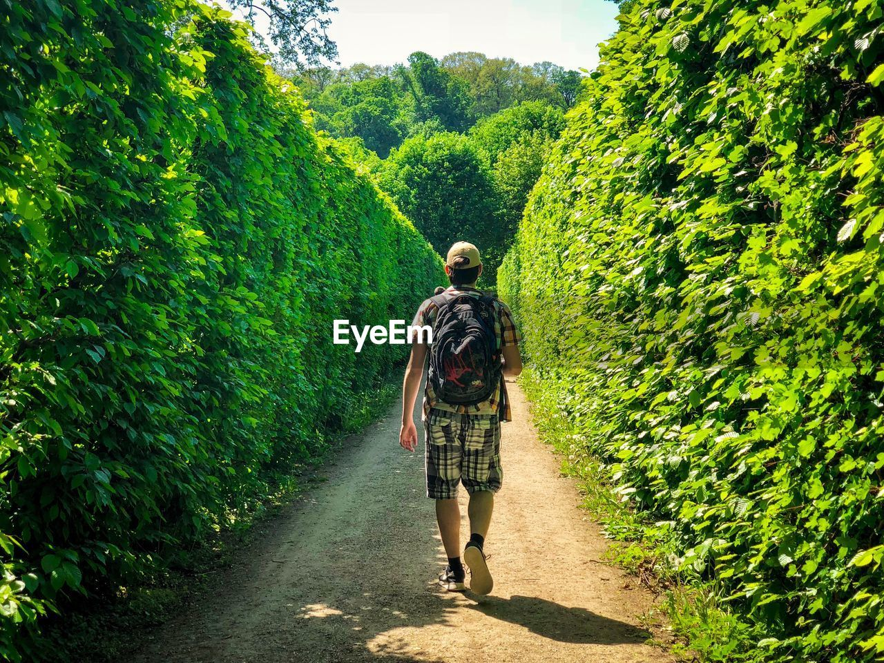 Rear View Of Man Walking On Footpath Amidst Plants