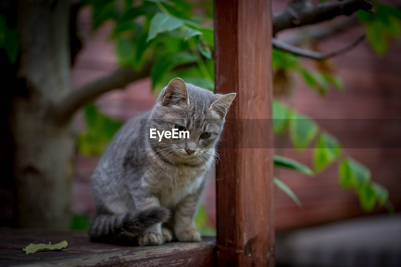 mammal, animal themes, domestic, domestic cat, cat, one animal, feline, pets, animal, domestic animals, vertebrate, no people, focus on foreground, whisker, portrait, day, sitting, looking away, wood - material