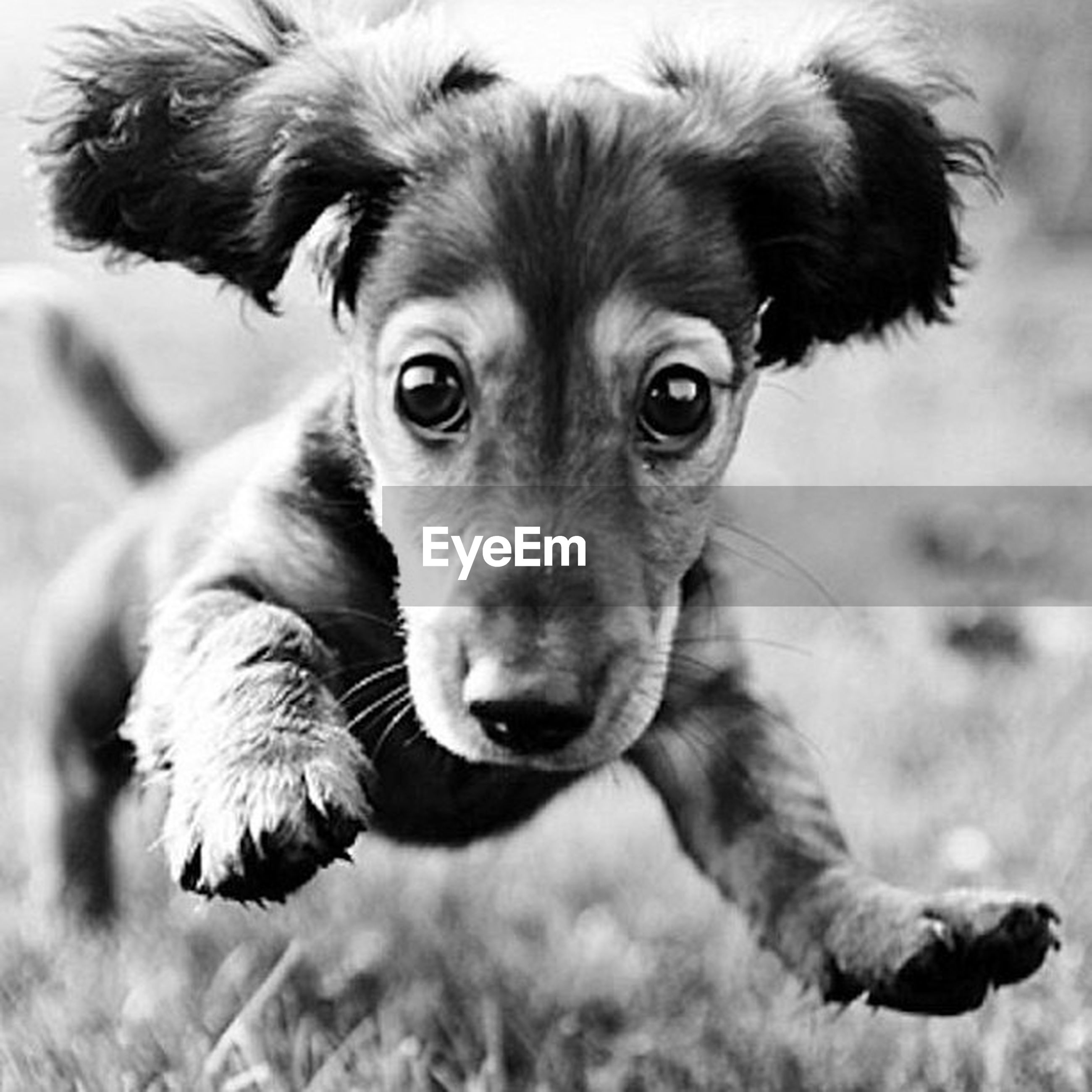dog, animal themes, domestic animals, pets, mammal, one animal, looking at camera, portrait, animal head, close-up, focus on foreground, selective focus, puppy, no people, indoors, animal body part, zoology, young animal, canine