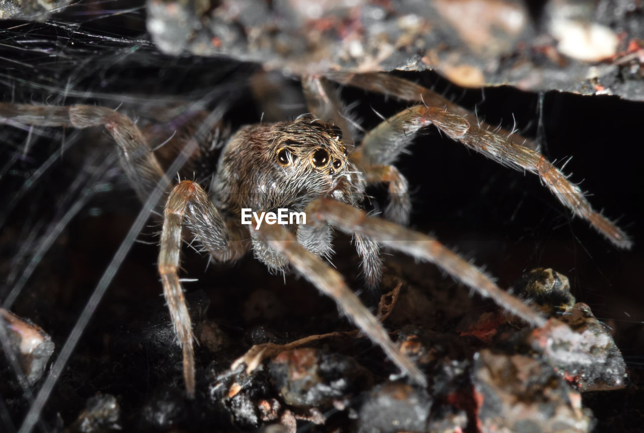 animals in the wild, animal wildlife, animal themes, animal, one animal, arachnid, spider, insect, invertebrate, arthropod, close-up, zoology, nature, no people, animal body part, focus on foreground, day, outdoors, selective focus, animal leg