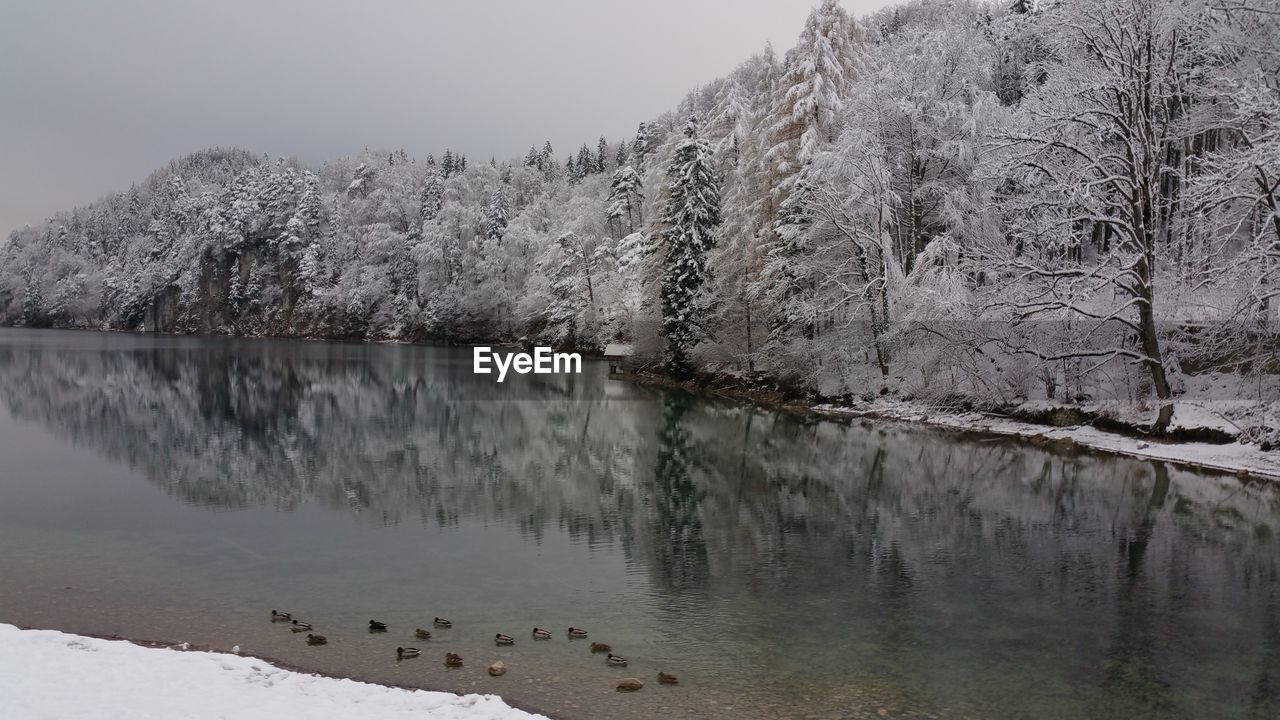 Reflection Of Frozen Trees In Lake During Winter