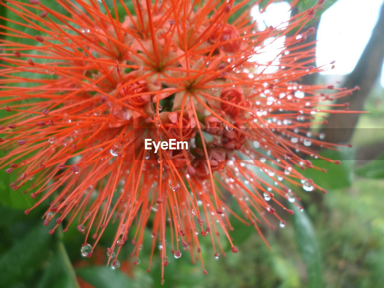 flower, growth, fragility, close-up, focus on foreground, no people, nature, flower head, day, red, beauty in nature, outdoors, freshness