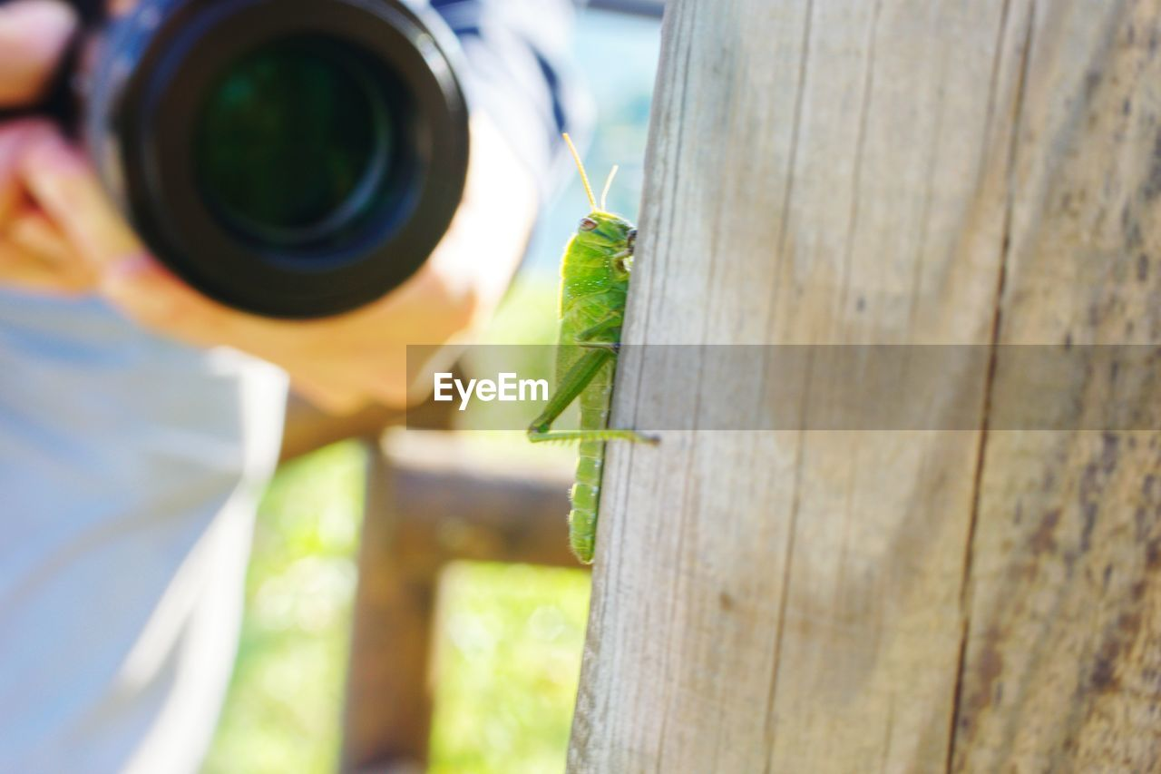 animal themes, animal, animal wildlife, animals in the wild, invertebrate, insect, one animal, green color, focus on foreground, close-up, wood - material, day, no people, selective focus, outdoors, nature, praying mantis, grasshopper, zoology, animal body part