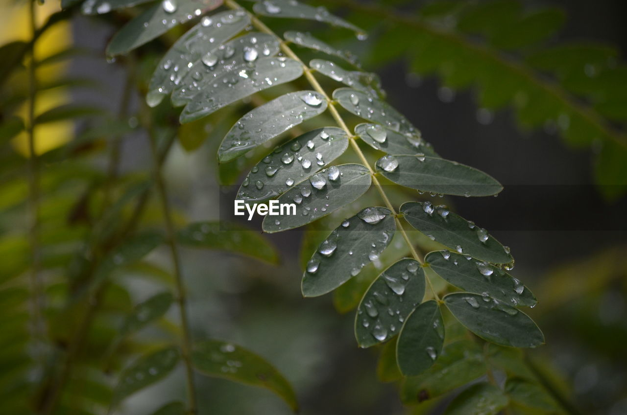 drop, water, wet, leaf, plant, growth, plant part, close-up, green color, beauty in nature, focus on foreground, rain, nature, no people, day, vulnerability, freshness, leaves, outdoors, dew, raindrop, purity, rainy season
