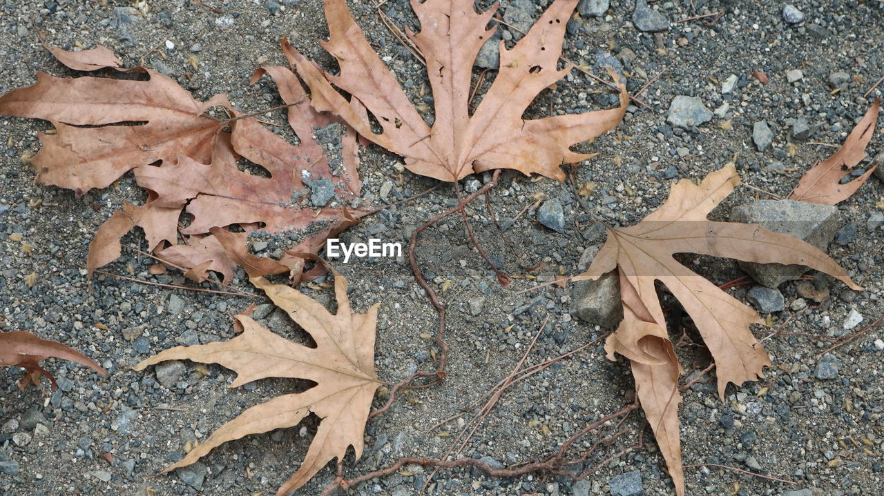 leaf, plant part, autumn, dry, high angle view, change, nature, leaves, land, falling, day, no people, directly above, close-up, field, plant, maple leaf, vulnerability, outdoors, fragility, natural condition, fall