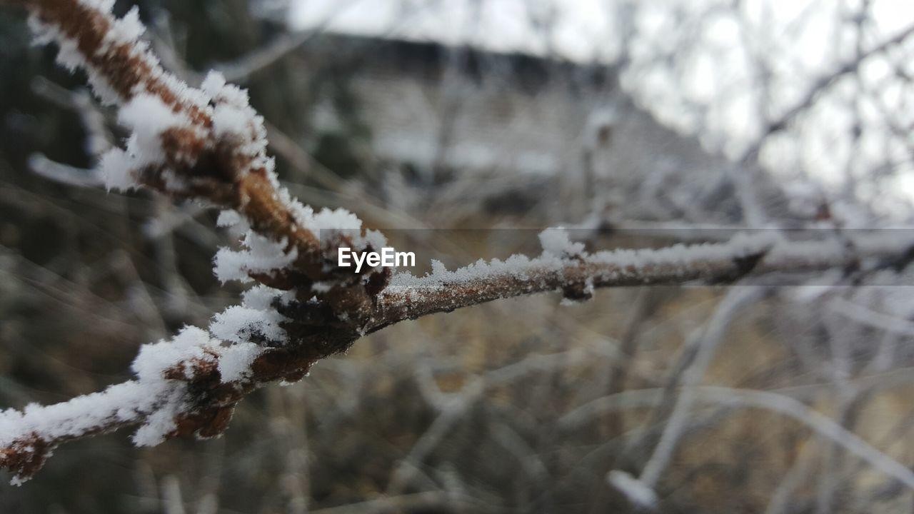 winter, snow, cold temperature, nature, white color, weather, focus on foreground, outdoors, day, close-up, no people, frozen, beauty in nature, frost, branch, growth, tree, fragility
