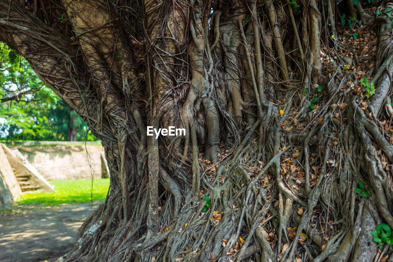 tree, plant, tree trunk, trunk, day, nature, growth, no people, outdoors, land, close-up, focus on foreground, branch, tranquility, forest, tropical climate, root, palm tree, plant bark, park, treelined
