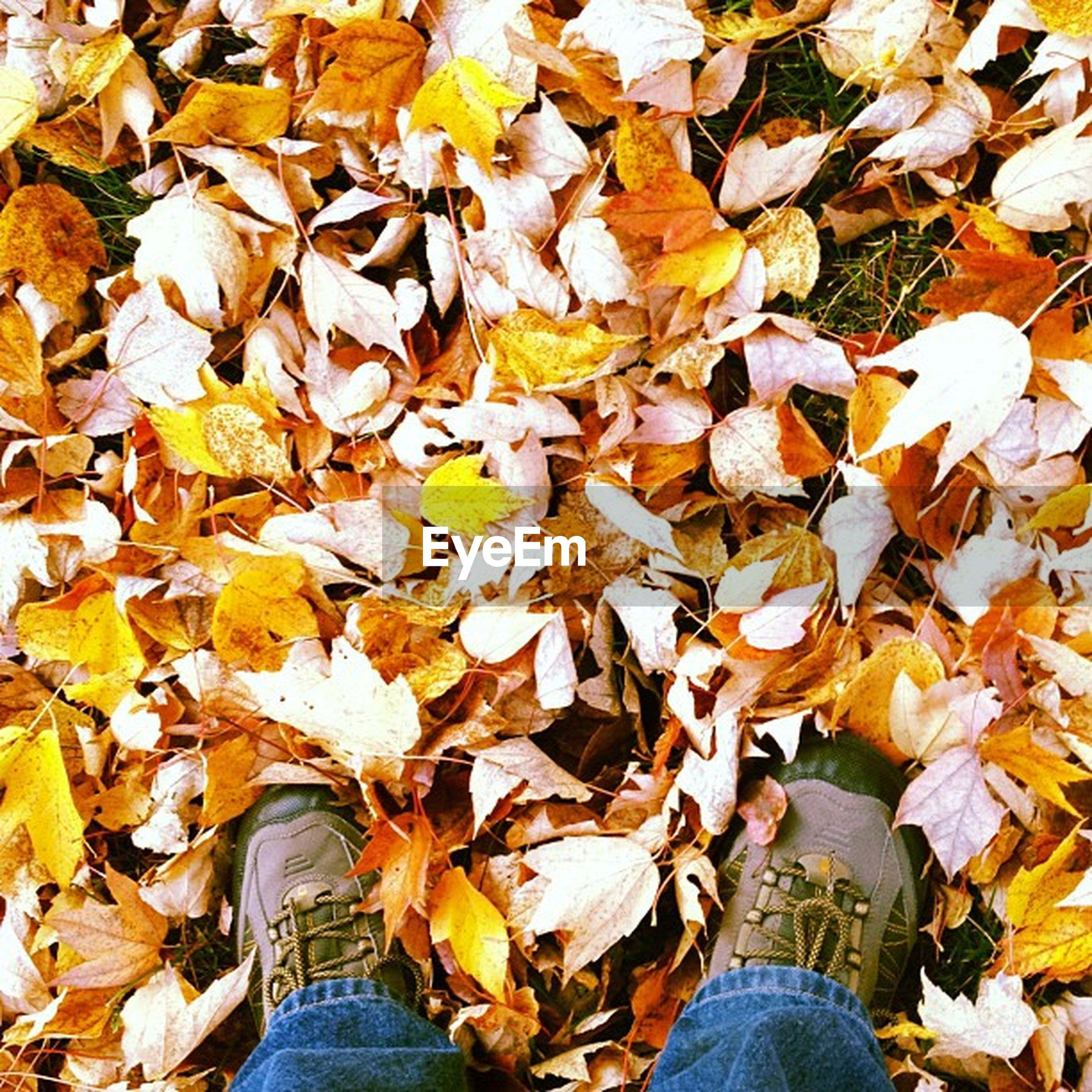 low section, person, autumn, personal perspective, leaf, shoe, change, season, standing, leaves, lifestyles, dry, leisure activity, men, high angle view, unrecognizable person, human foot