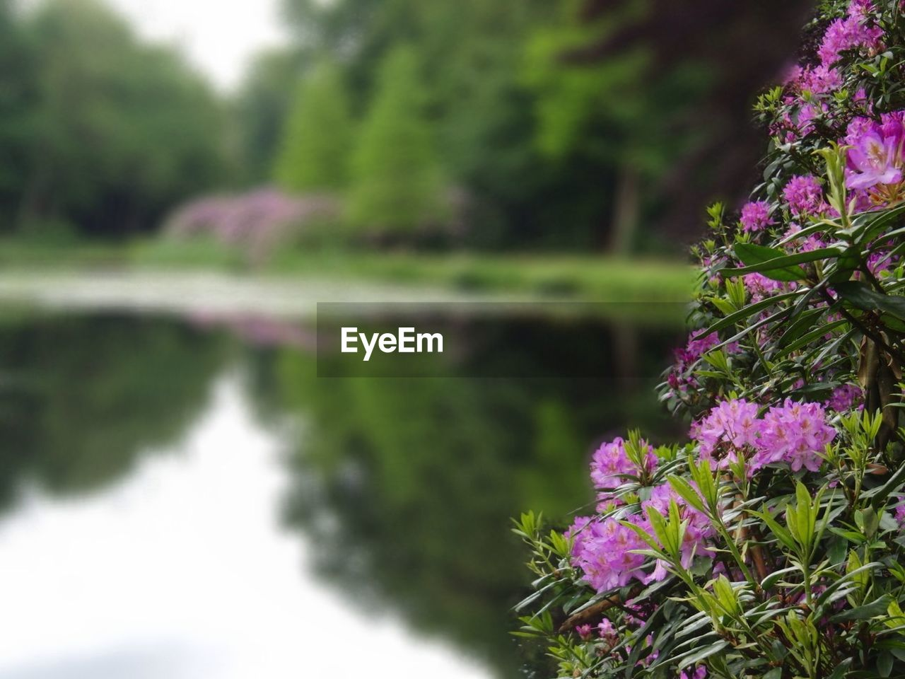nature, flower, reflection, beauty in nature, growth, water, no people, plant, outdoors, day, tranquility, lake, scenics, freshness, fragility, tree, close-up, sky