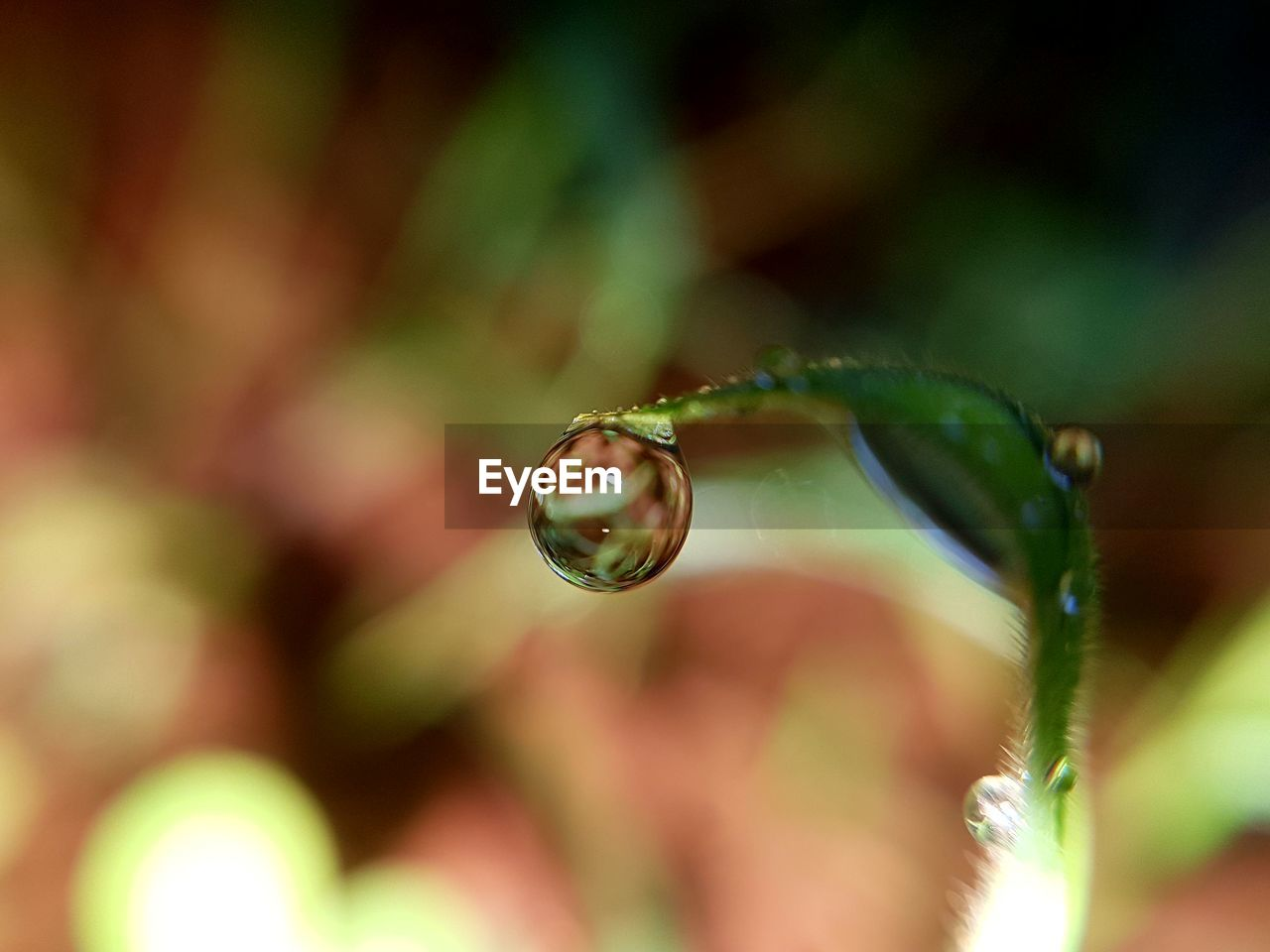drop, close-up, selective focus, plant, water, vulnerability, nature, fragility, plant part, leaf, growth, beauty in nature, freshness, wet, focus on foreground, day, no people, flower, outdoors, purity, raindrop, dew