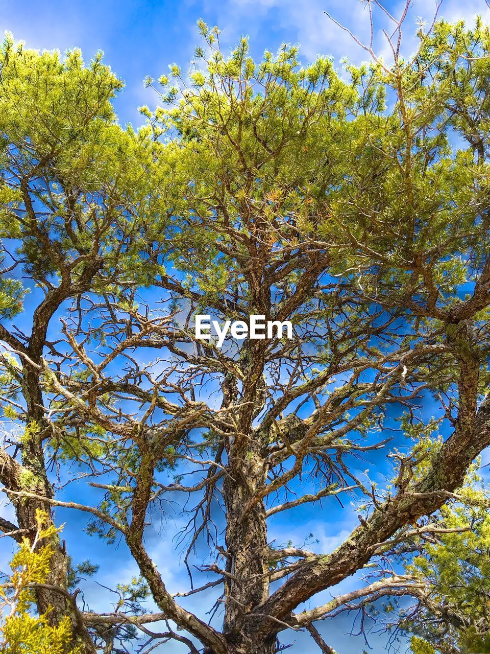 tree, growth, nature, branch, low angle view, beauty in nature, no people, day, tranquility, sky, outdoors, scenics, close-up, freshness