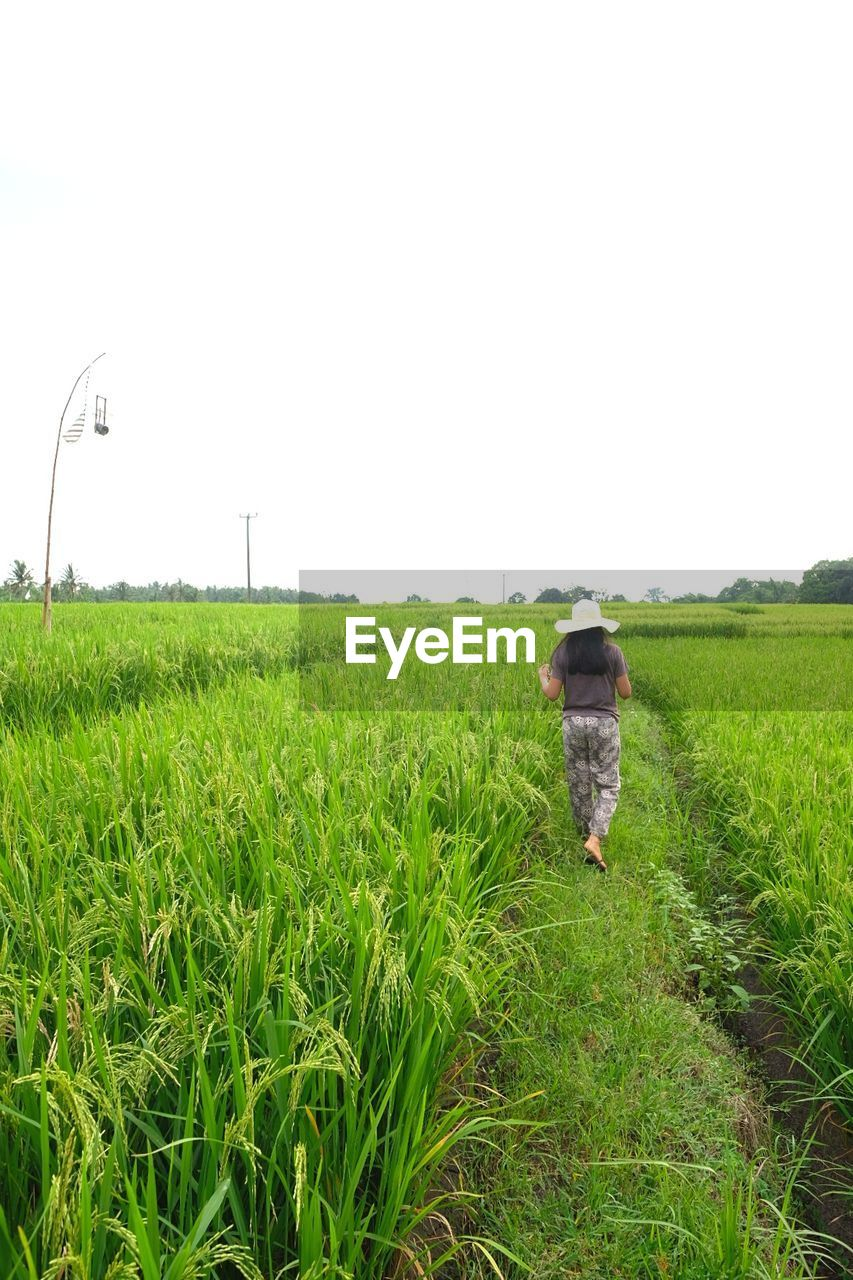 plant, field, land, growth, green color, agriculture, landscape, nature, one person, grass, sky, rural scene, real people, farm, environment, clear sky, scenics - nature, day, copy space, beauty in nature, outdoors, farmer