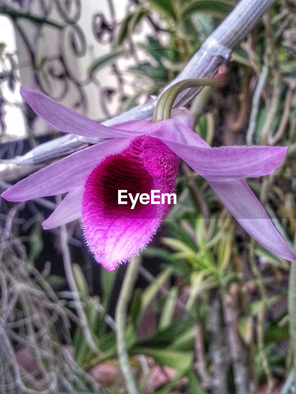 flower, fragility, growth, petal, nature, beauty in nature, freshness, plant, flower head, close-up, purple, day, botany, blossom, outdoors, no people, blooming, tree, crocus