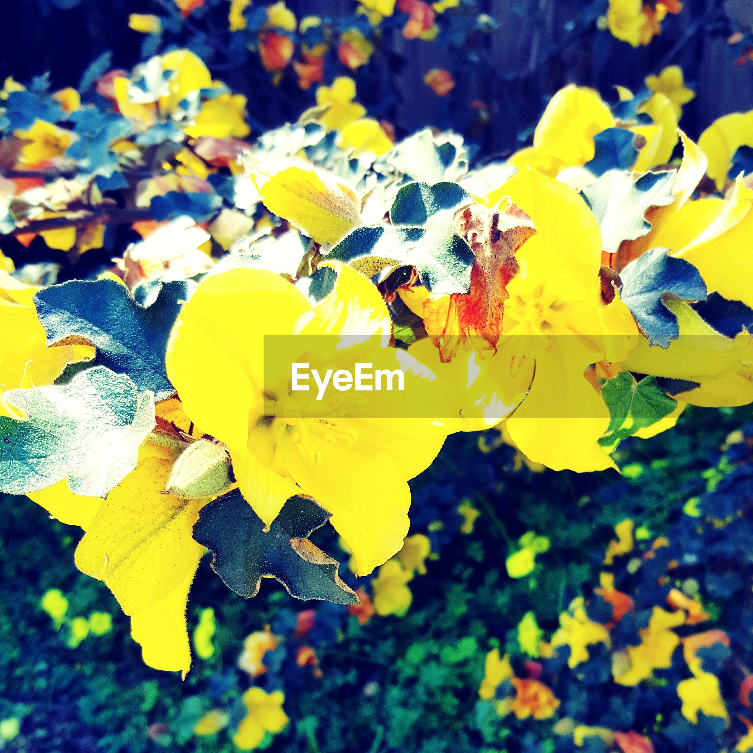 yellow, flower, petal, fragility, freshness, growth, beauty in nature, leaf, nature, flower head, blooming, focus on foreground, close-up, park - man made space, plant, season, day, autumn, in bloom, outdoors