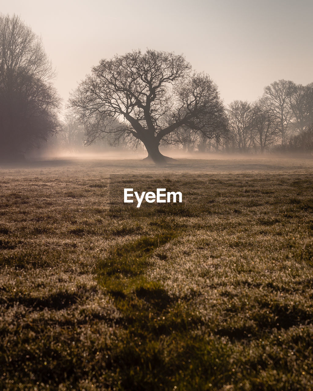 tree, plant, beauty in nature, landscape, bare tree, environment, field, tranquil scene, tranquility, sky, land, scenics - nature, non-urban scene, no people, fog, nature, remote, solitude, growth, outdoors, isolated, hazy