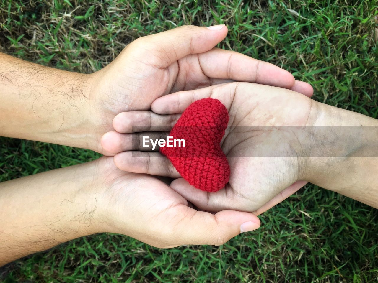 human hand, hand, human body part, plant, holding, grass, people, body part, nature, real people, day, berry fruit, close-up, high angle view, fruit, food and drink, red, two people, land, togetherness, finger