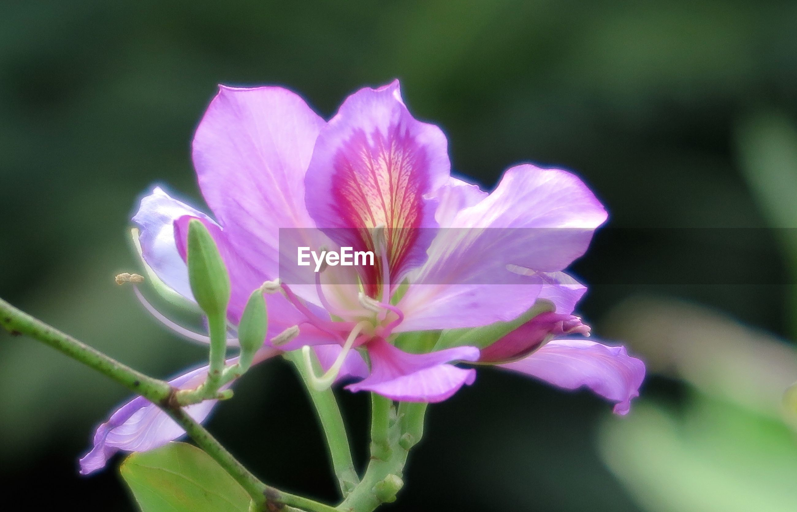 flower, nature, petal, fragility, growth, beauty in nature, plant, freshness, flower head, no people, outdoors, close-up, blooming, day