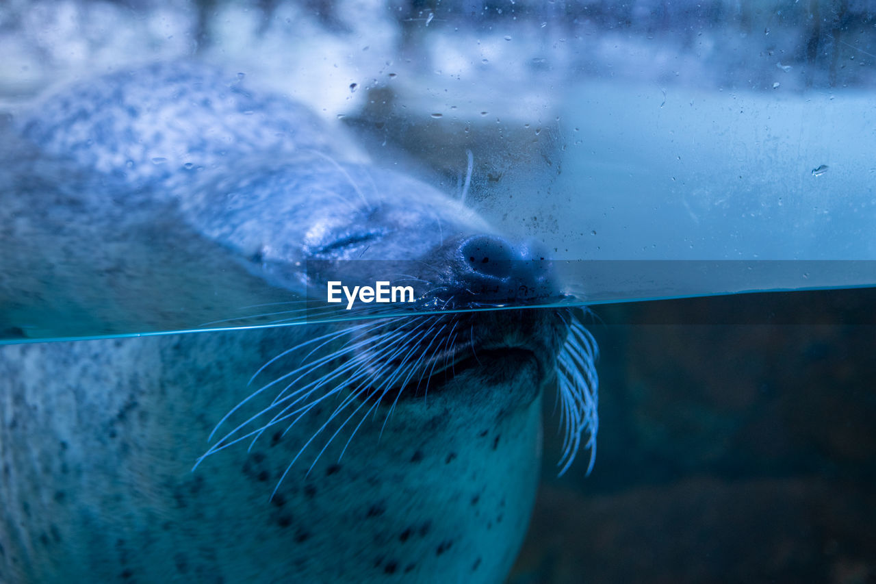 Close-up of seal underwater