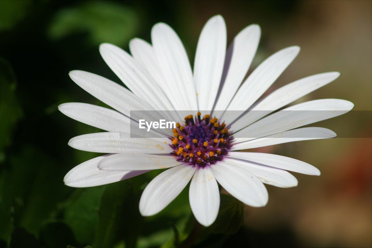 High angle close-up of white flower blooming outdoors