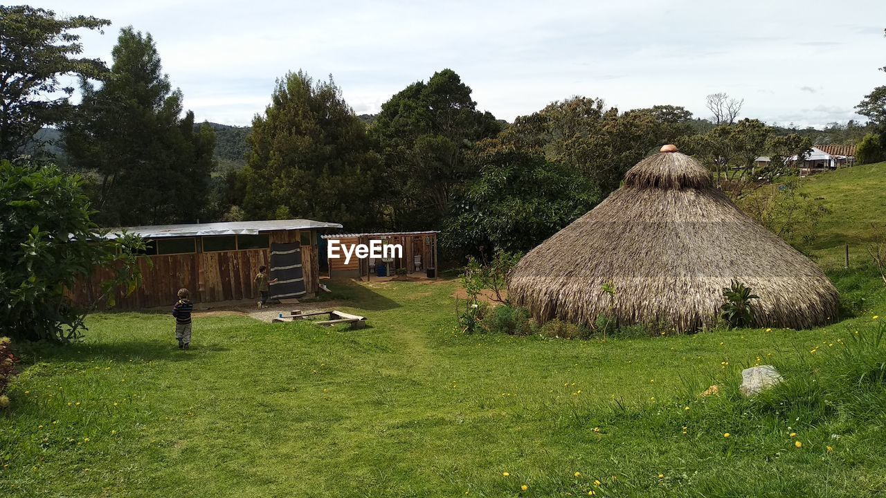 plant, tree, thatched roof, roof, grass, sky, nature, architecture, land, hut, built structure, field, building exterior, landscape, house, green color, growth, building, no people, cloud - sky, outdoors