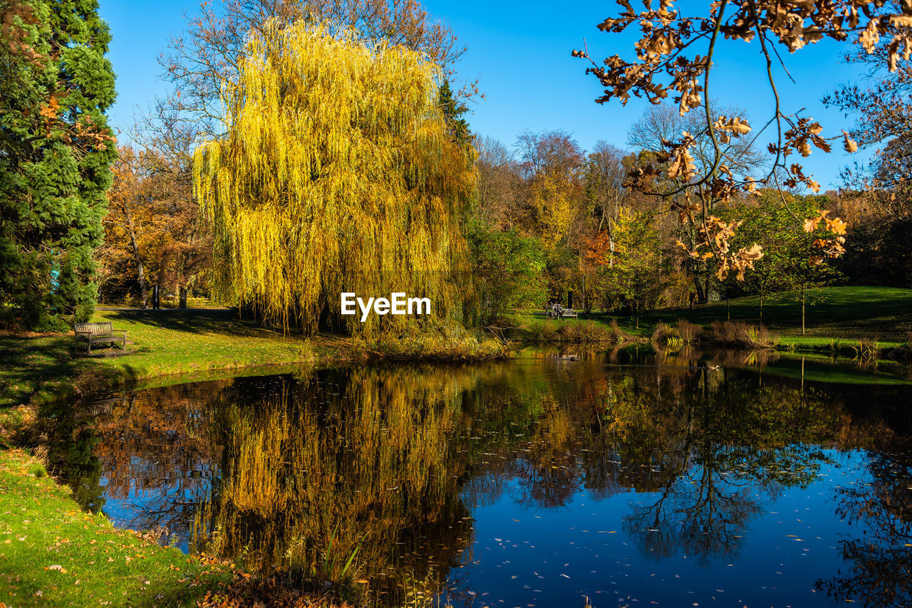 reflection, tree, water, lake, plant, tranquility, autumn, tranquil scene, beauty in nature, scenics - nature, waterfront, nature, change, growth, sky, no people, day, non-urban scene, idyllic, outdoors
