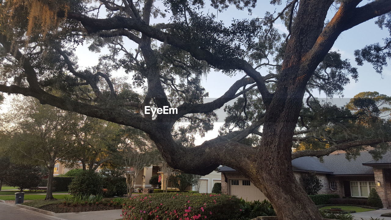 tree, day, outdoors, tree trunk, building exterior, built structure, architecture, no people, branch, nature, growth, beauty in nature, sky