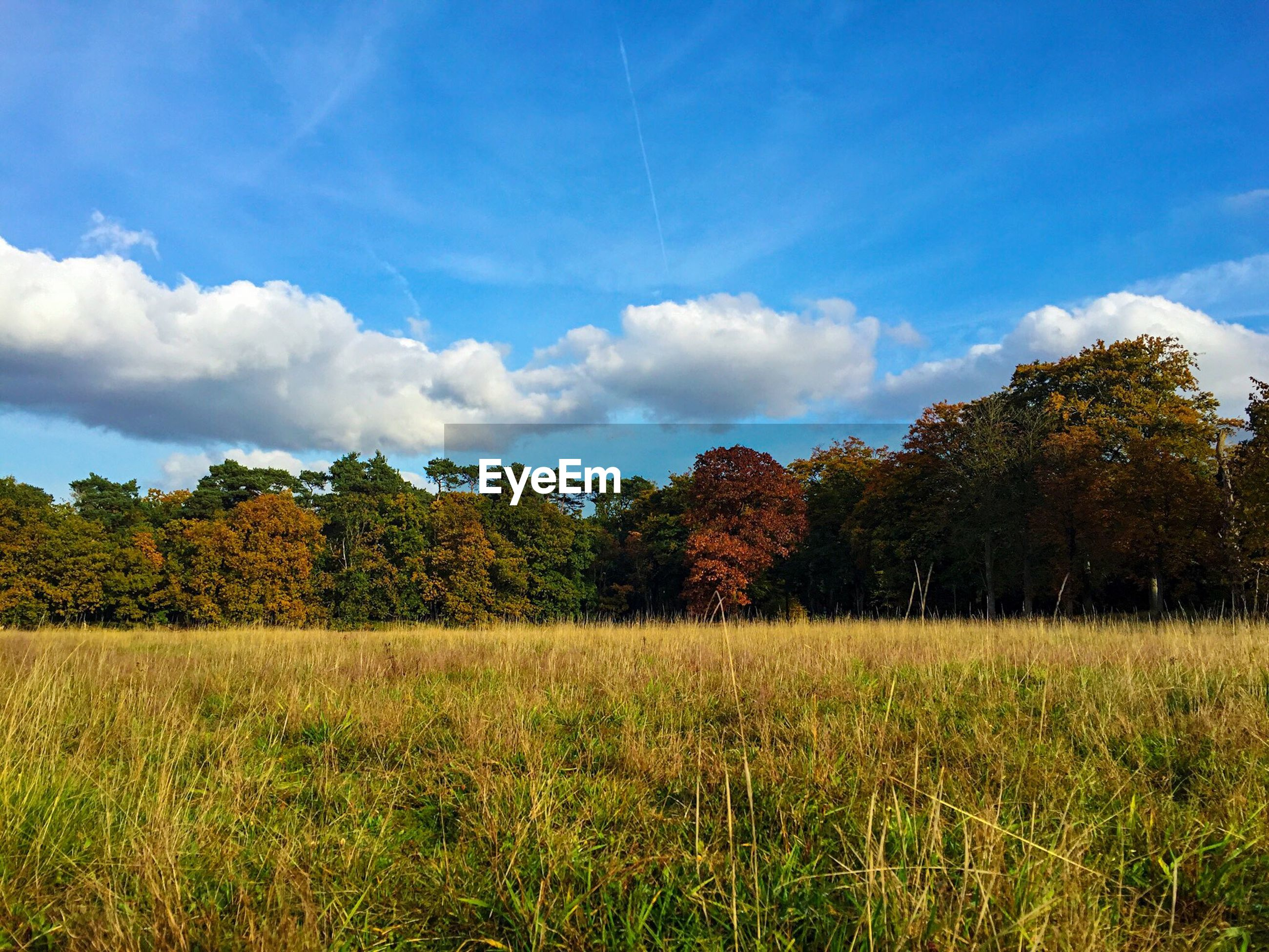 Trees growing by grassy field against sky during autumn