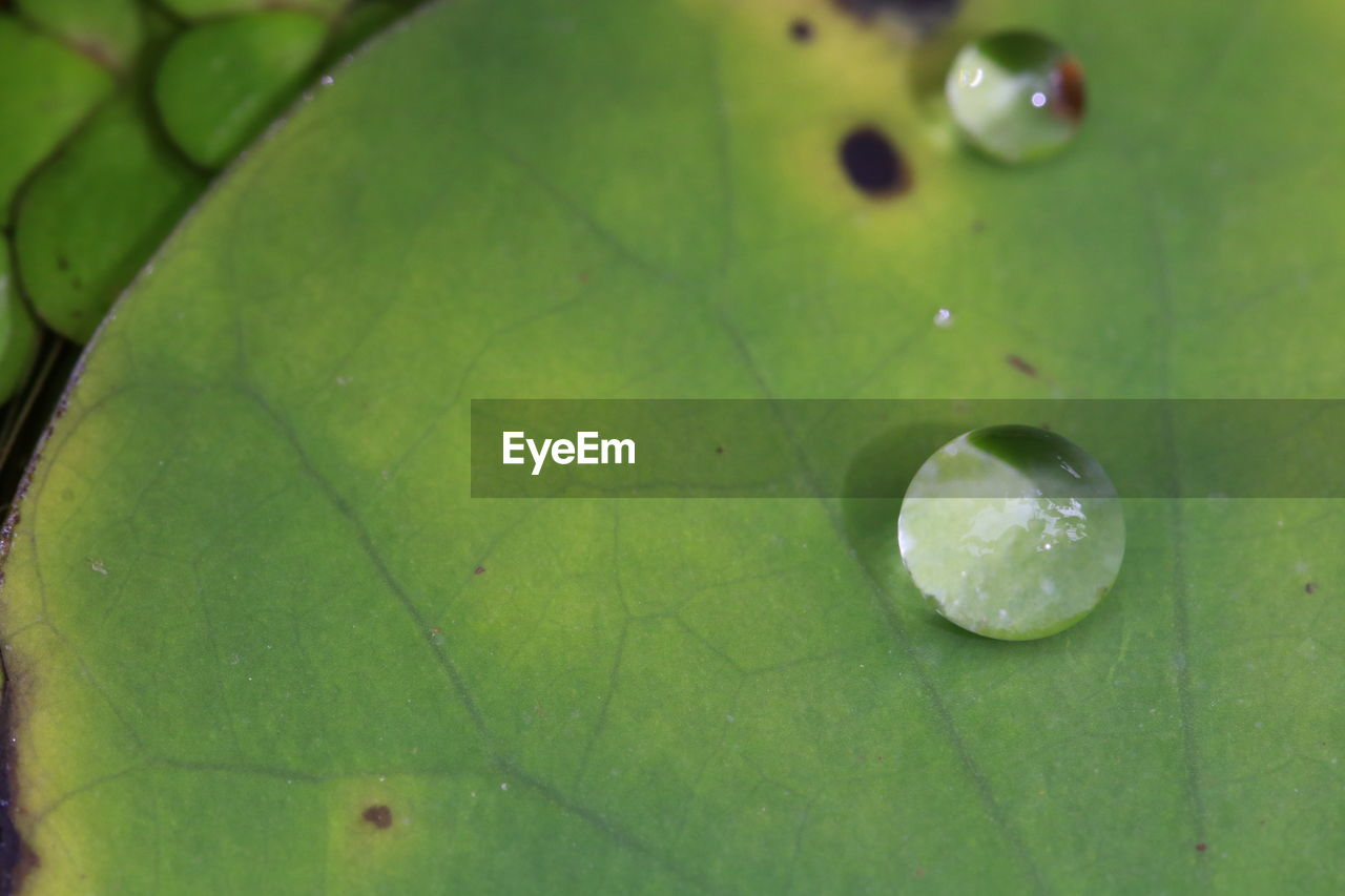 leaf, close-up, plant part, drop, green color, wet, nature, full frame, water, no people, plant, selective focus, growth, leaf vein, freshness, beauty in nature, backgrounds, fruit, day, outdoors, rain, purity, raindrop, leaves