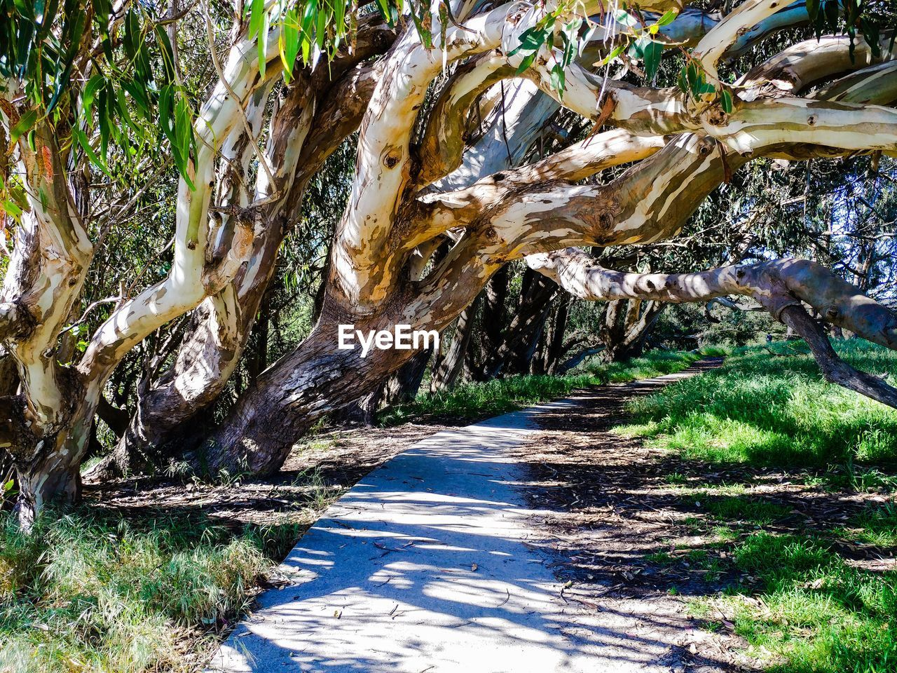 tree, tree trunk, nature, day, outdoors, sunlight, no people, growth, branch, shadow, forest, scenics, beauty in nature
