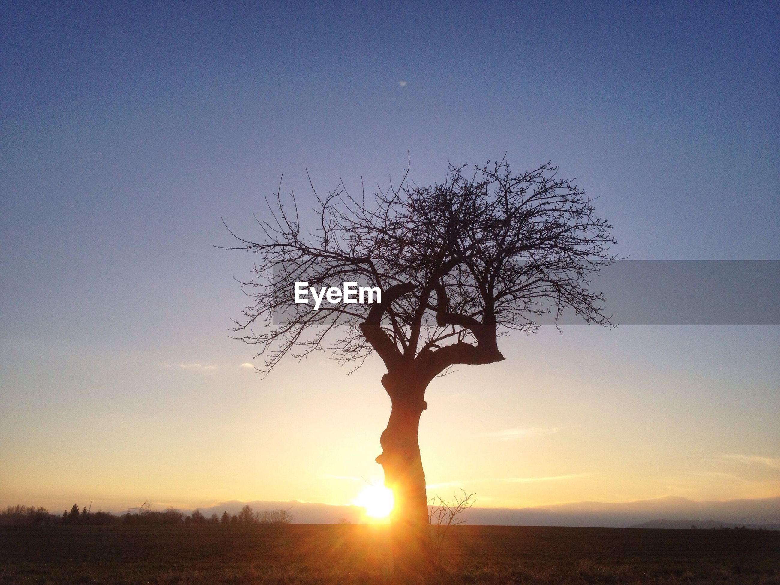Bare tree on field against sky during sunrise