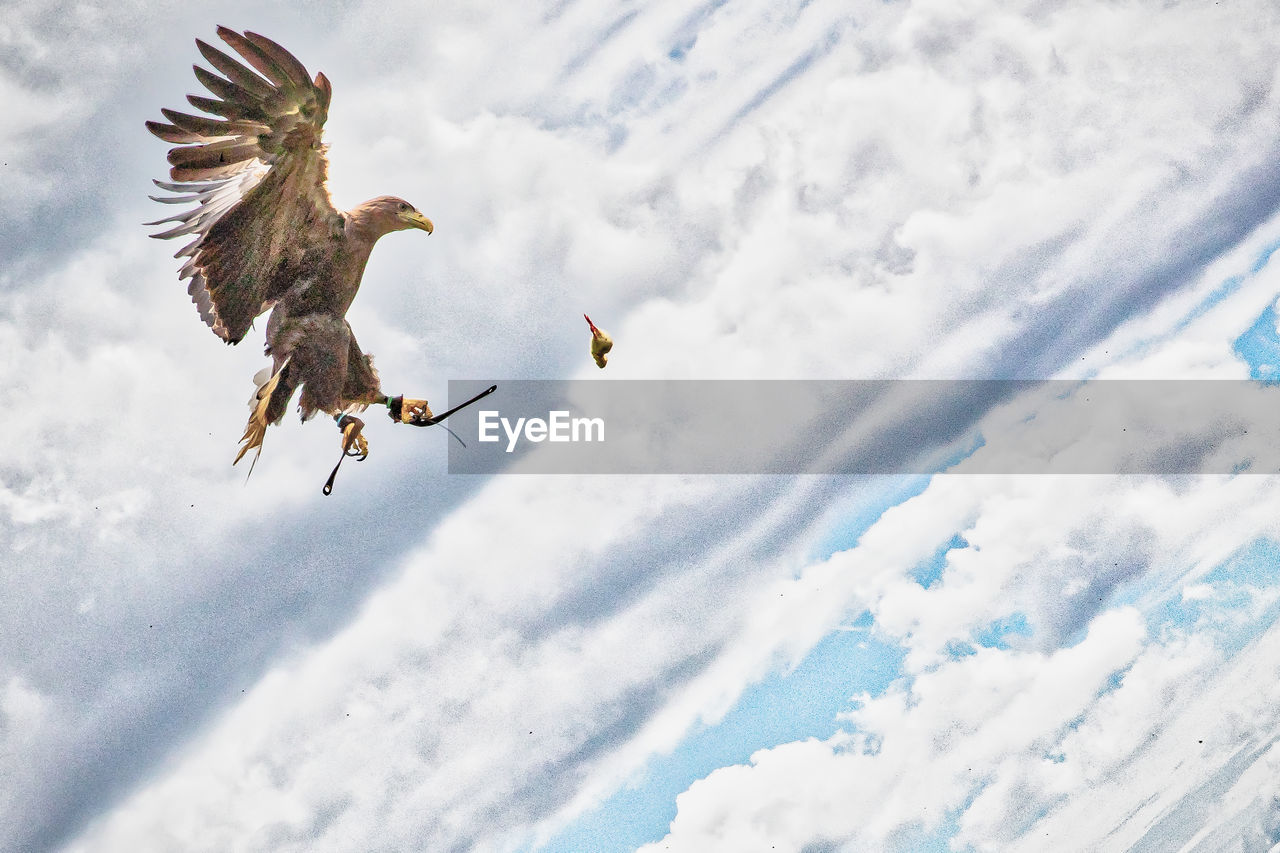 Low Angle View Of Eagle Flying Against Cloudy Sky