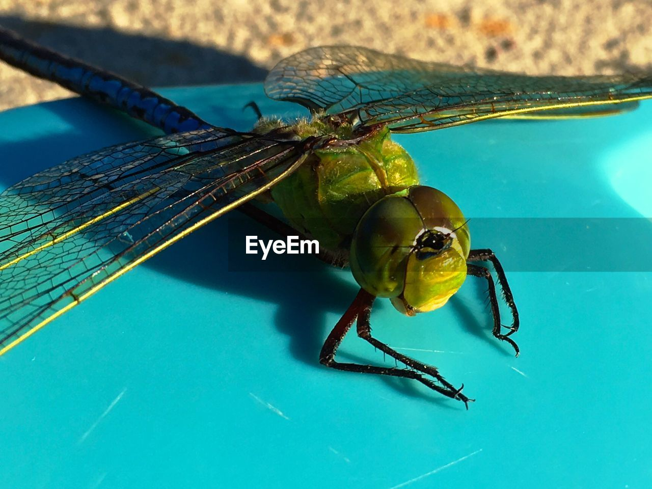 Close-up of dragonfly on play equipment