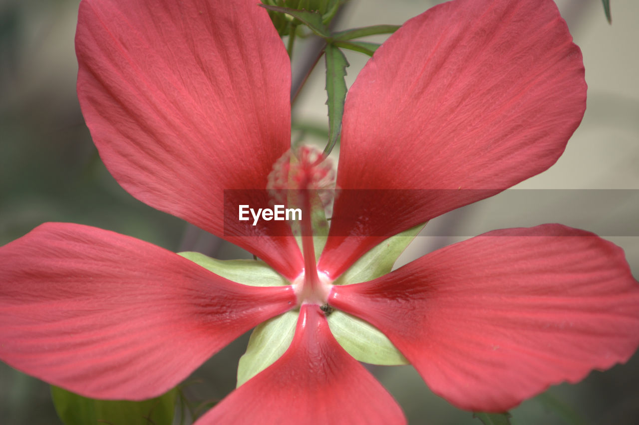 flower, petal, fragility, beauty in nature, flower head, freshness, nature, growth, red, close-up, plant, no people, day, outdoors, blooming