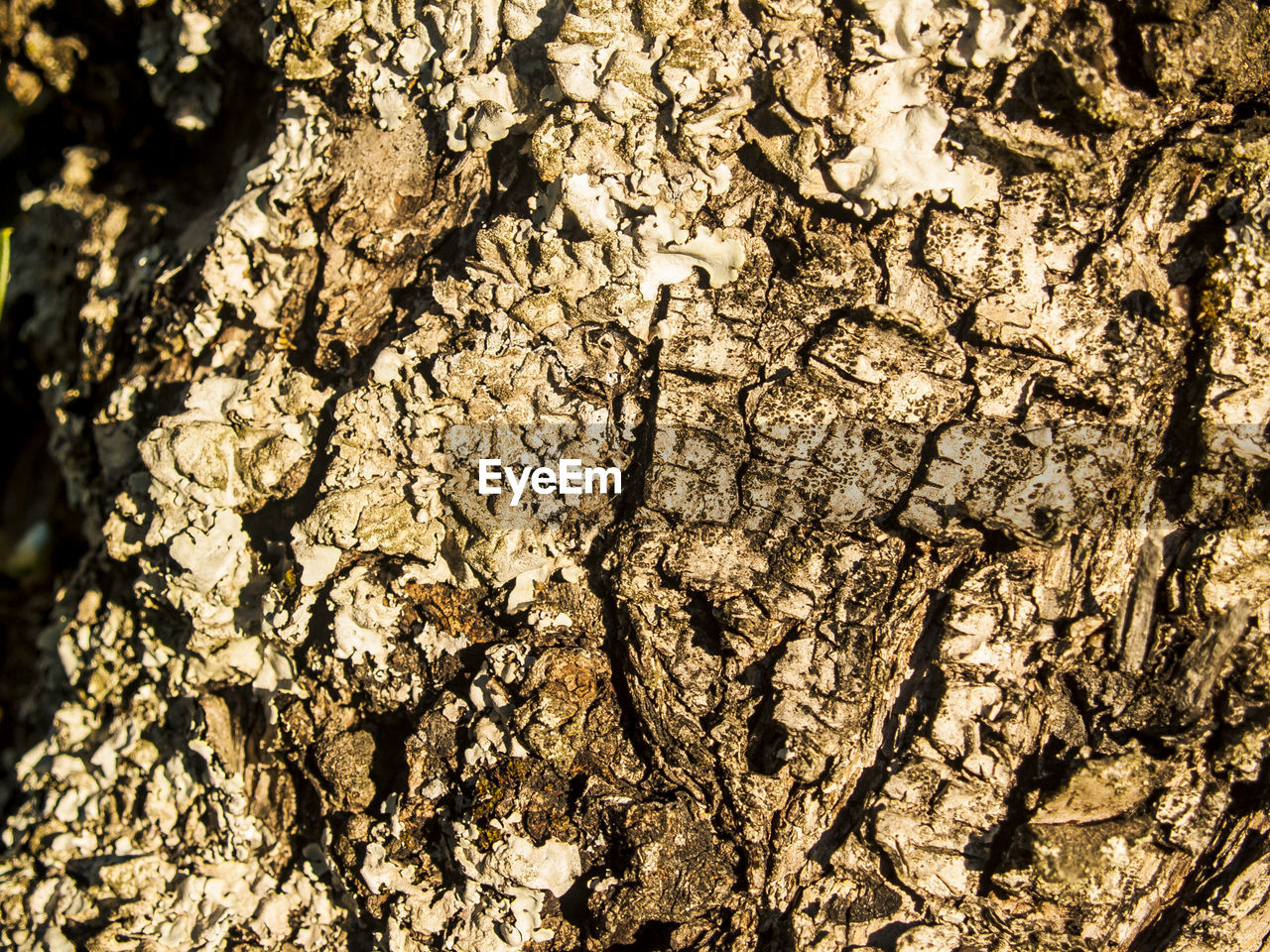 textured, close-up, backgrounds, cracked, no people, rough, nature, full frame, tree trunk, pattern, day, tree, bark, outdoors