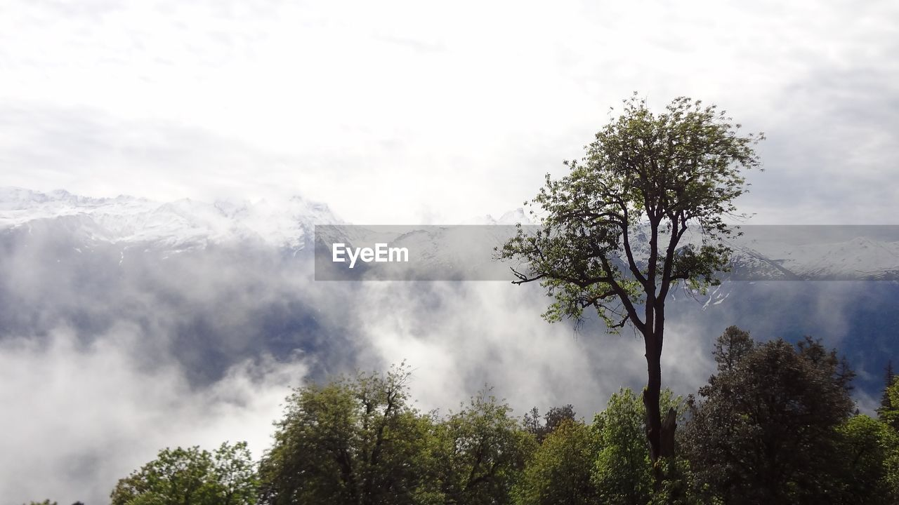tree, nature, mountain, beauty in nature, day, sky, cloud - sky, smoke - physical structure, no people, outdoors, scenics, growth, forest, tranquil scene, tranquility